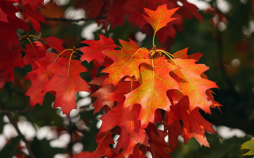 Here comes the autumn, here goes the sun: Vitamin D